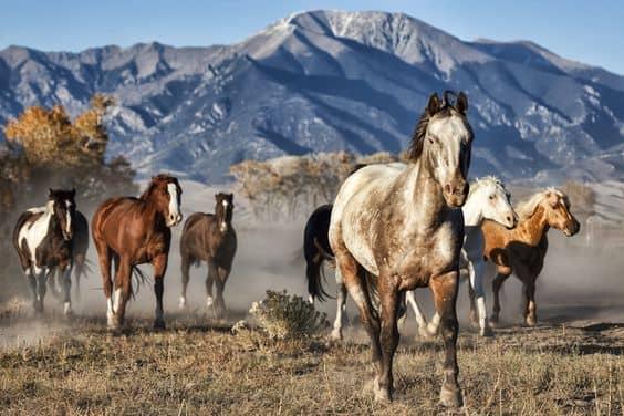 مجموعة من الخيول تركض